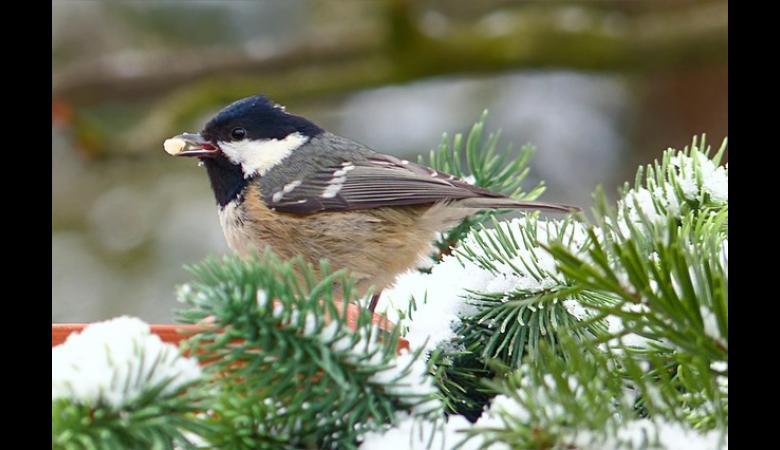 Comment entretenir son jardin en hiver id es et for Jardin anglais en hiver