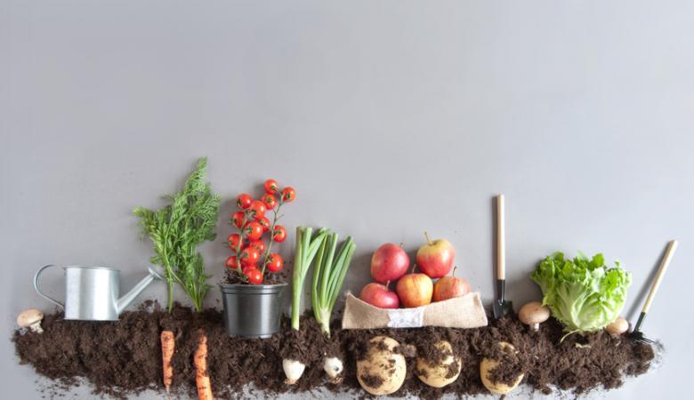 Quand planter ses lgumes articles relatifs planter des lgumes en pots quand planter nos - Quand planter les courgettes ...